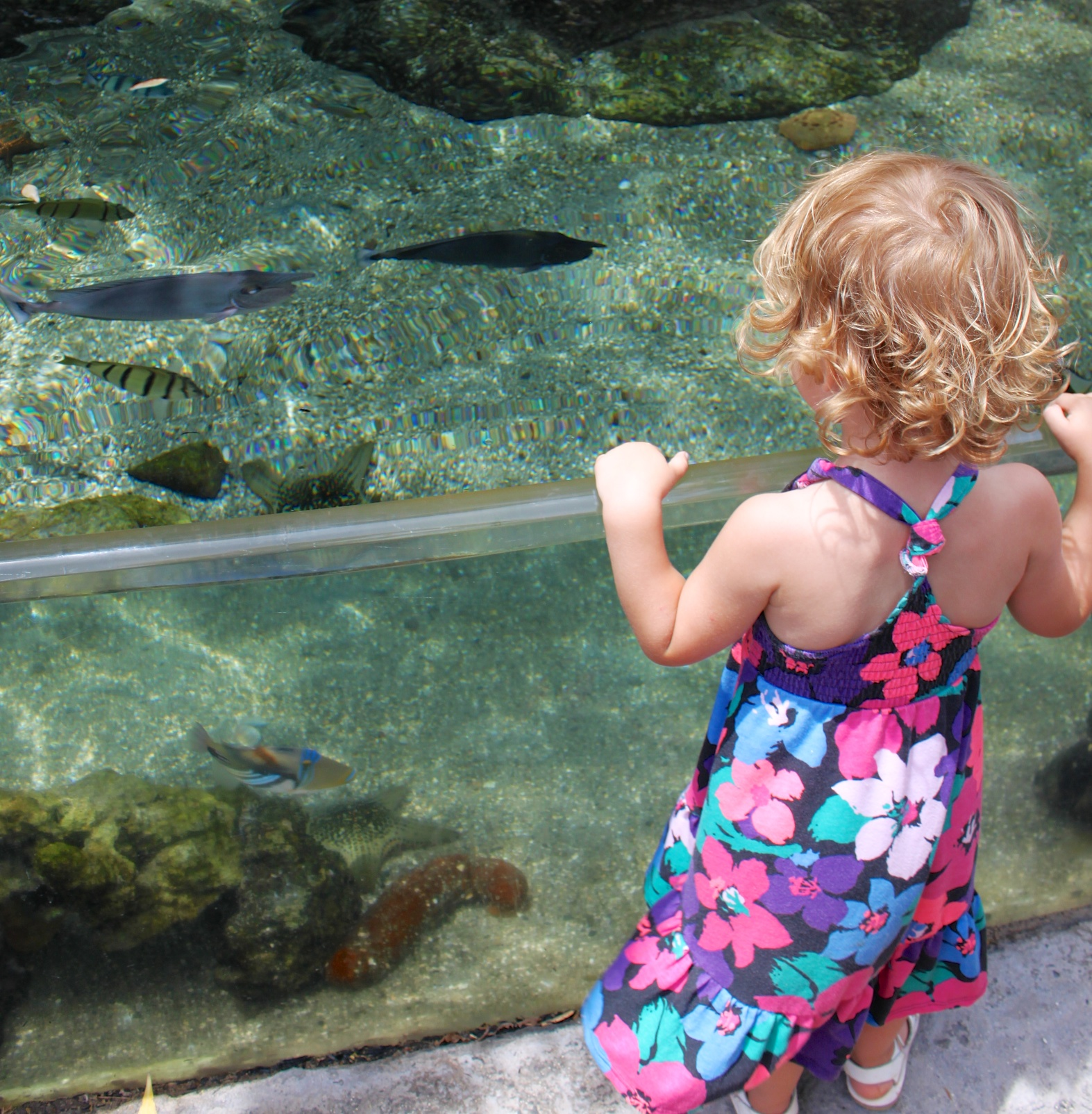 M loves the fish at the Maui Ocean Center. But she has to watch out these fish jump!