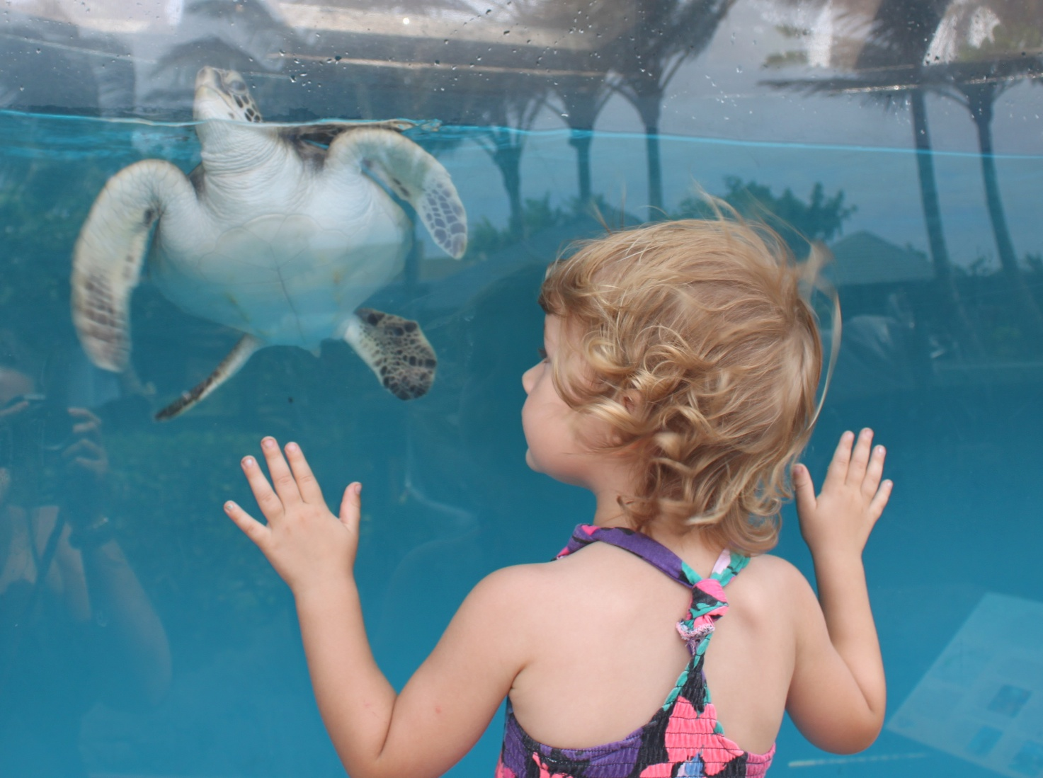 M Loves the Turtle at Maui Ocean Center